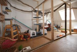 ausstattung katzenhotel neuw hren urlaub f r samtpfoten und kleintiere. Black Bedroom Furniture Sets. Home Design Ideas